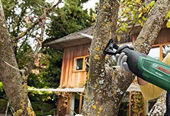Baum fällen – Alles was Sie wissen müssen